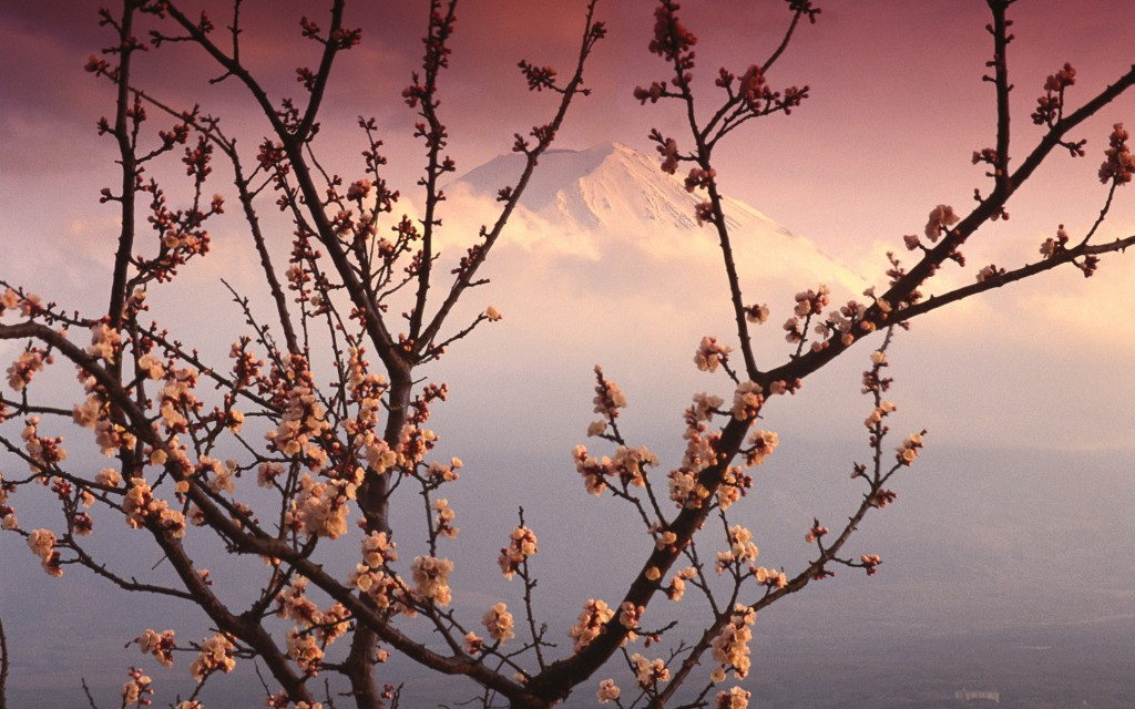 ??? (Mount Fuji and Plum Blossoms, Japan))