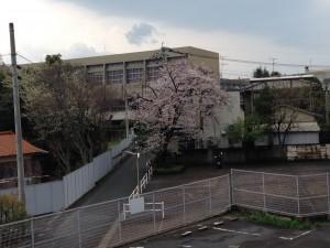 福冈赏樱花游记