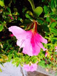春天,在福冈赏花吧