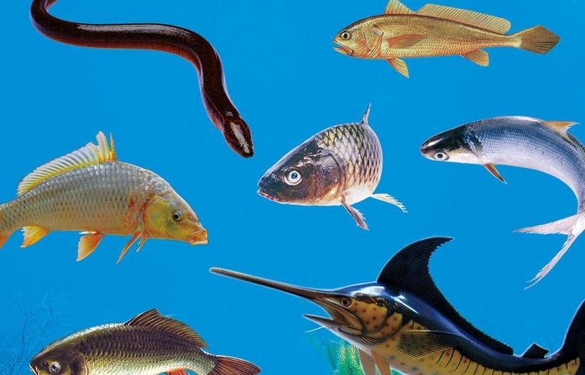 日语中有关鱼类的词语