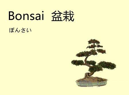 英文中的常见日语外来词