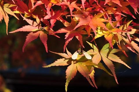 九州地区十大红叶观赏地点