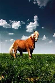 千里马不进取,也是废马——送给自己,以示自警!