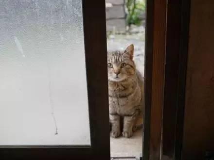 瞅瞅日本心机猫们都带铲屎官去了哪些奇怪的地方