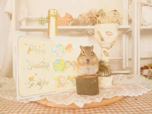 一只每天吃吃睡睡的花栗鼠,这小日子过的也太幸福了吧!