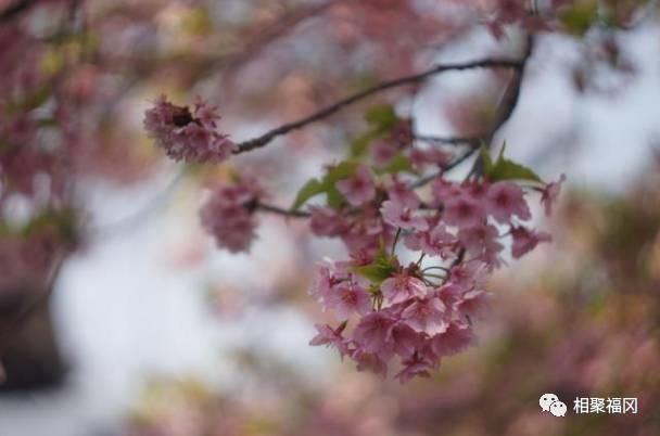 【miyama杯】樱花摄影大赛优秀作品一览