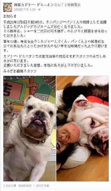 日本这俩动物间的友情,感动了千万人。