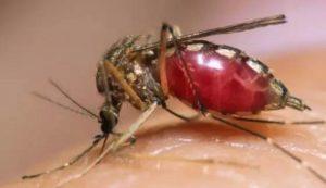 日本专家教你4招,夏天蚊子再多也不怕......