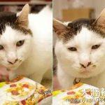 这只丑萌丑萌的猫在日本火爆了,原来颜值低也可以走明星路线