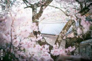 日本九州哪里好玩?看这里,一网打尽