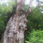 这辈子非去一次不可!呼吸大自然的味道,日本自然遗产