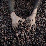 残酷真相:你吃的每一块巧克力,都沾染着非洲童奴的血泪