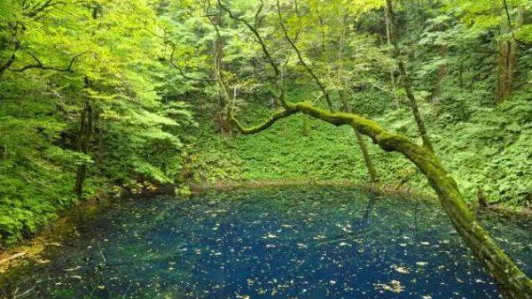 想看日本最美的世界遗产,住这几家酒店就够了!