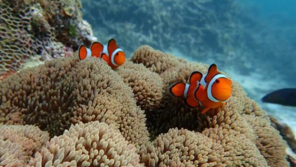 【九州自由行之冲绳】去冲绳就要去离岛游玩还可以在大海里浮潜