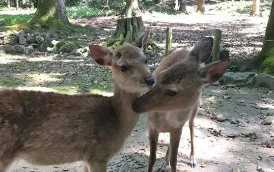 【日本自由行】在奈良和小鹿亲吻,在大阪购物,仿佛梦境一般的尾声