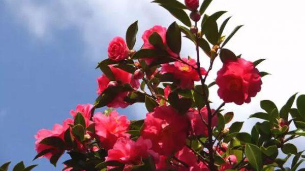 【福冈经典观光线路】周末去能古岛眺望远方,与自然合为一体净化心灵