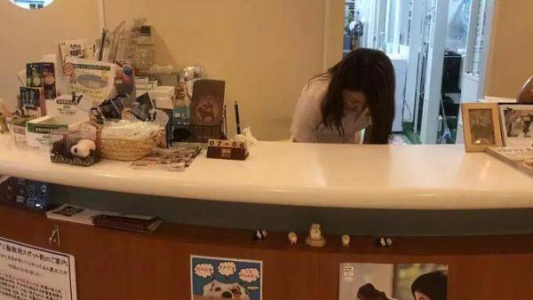 在日本宠物和人一样享受美好医疗,喵喵实地带大家看看