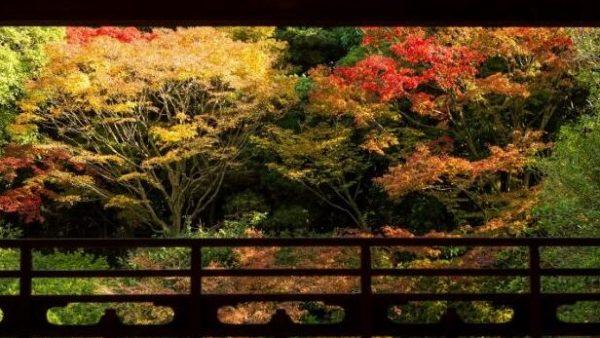 【2019年版】饱览日本福冈之秋!福冈红叶景点8选