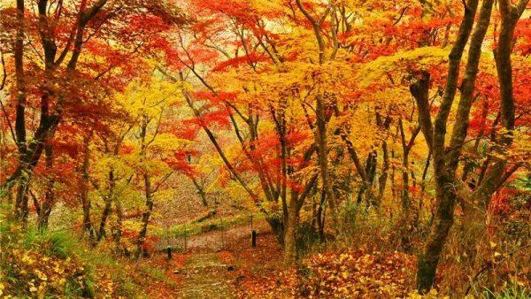 红叶季|大分县私藏小众赏秋景点