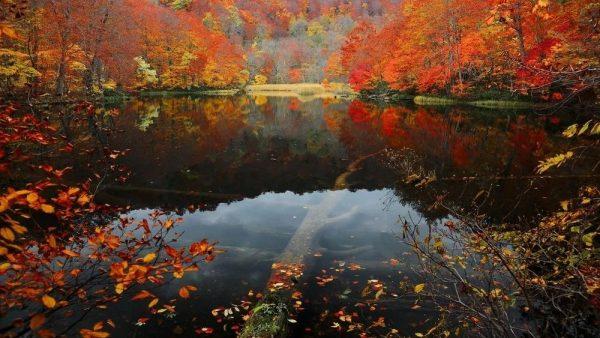 日本深秋 | 那些隔着屏幕被美哭的地方