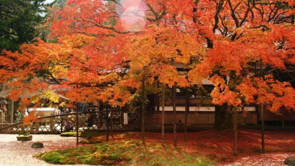 一口气送上日本47县的绝美红叶,这些地方的红叶都美翻了!