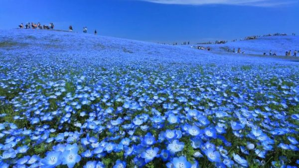 深度丨日本这些个小众旅行地,才是你该去的地方!