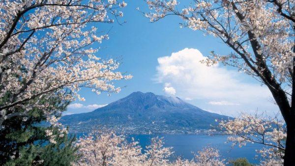 樱灿惊三月|鹿儿岛之浪漫樱花季