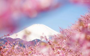日本留学 | 不同学历不同申请方式