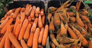 烂掉的垃圾蔬果还能被出售,这些日本人都疯了