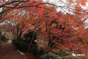 【福冈·赏枫】北九州岛金秋赏红叶盛宴!不容错过的5个红叶景点