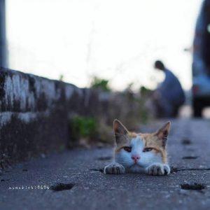 这才是街边流浪猫的日常,一条水沟就可以玩得很嗨~
