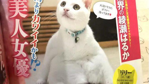 天哪噜,日本猫奴必读《周猫大众》,且看喵界中的八卦搞笑杂志