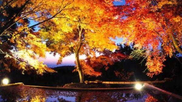 【日本九州自由行】秋意渐浓,九州这些经典红叶观赏地你去过了吗?