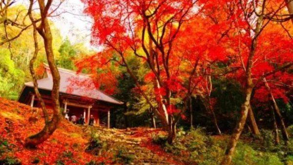 日本旅游 | 大部分日本人都不知道的绝美隐世秘境,你去过几个?