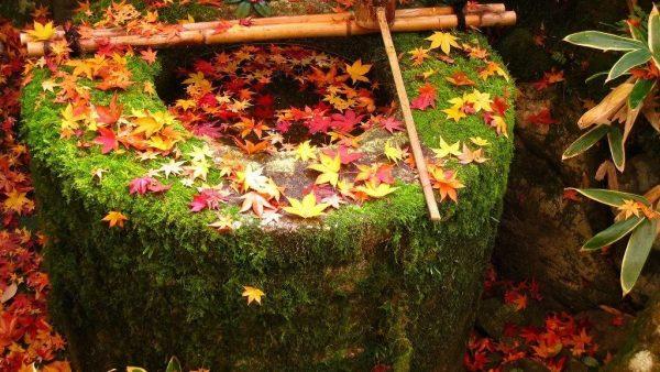京都的庭园,你又曾打卡过几个?