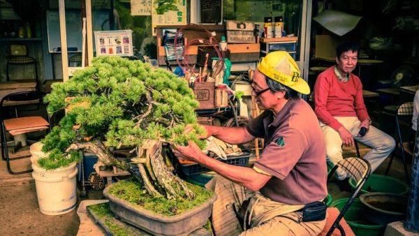有生命的日本盆栽