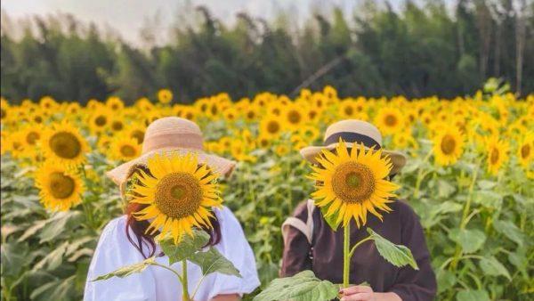 久石让的《Summer》到底是什么颜色?7个人气日本花田给你答案!
